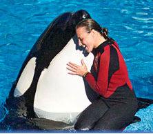 killer whale kills trainer 2010