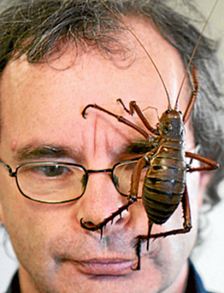 giant weta insect
