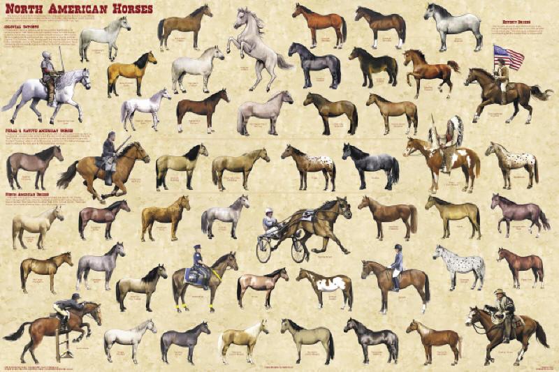 fewer horses and bayonets obama
