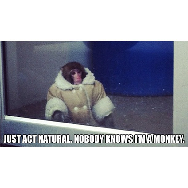 just act normal ikea monkey