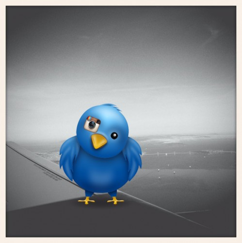 twitter instagram photos