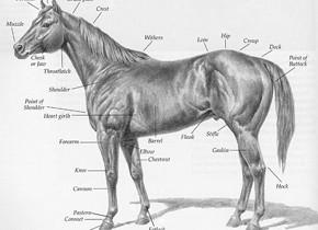 horsemeat found in burgers
