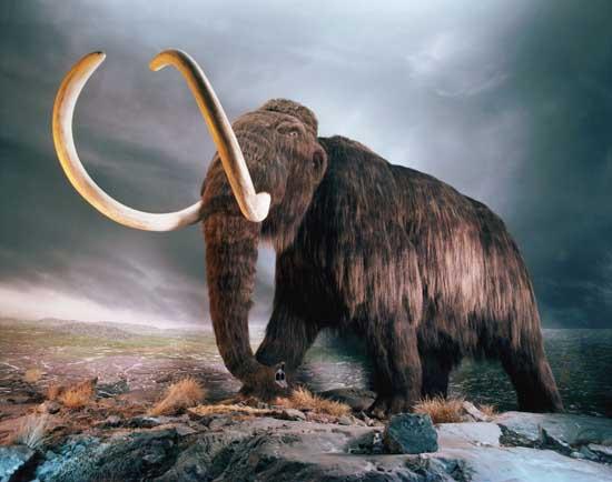 mammoth blood found