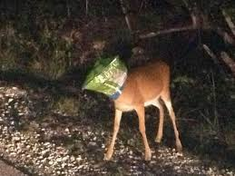 deer-doritos-bag-picture