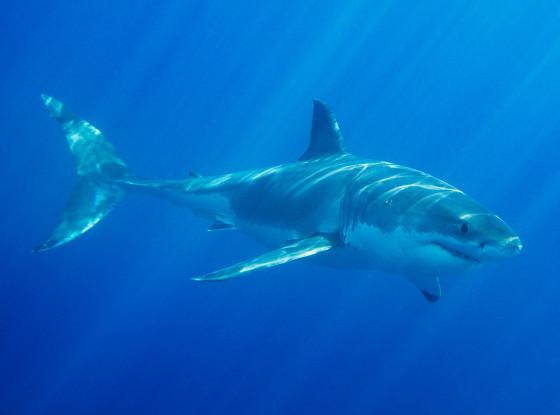 pacifica-shark-attack-kayaker