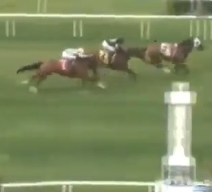 racehorse loses rider finishes race