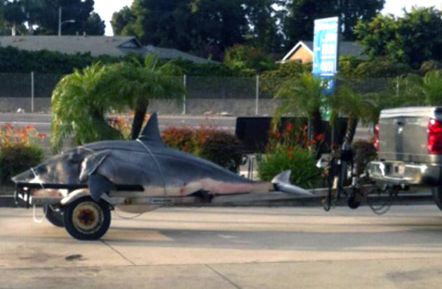 shark catch record mako california