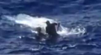 tuna-capsizes-boat