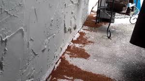 crazy ants invasion