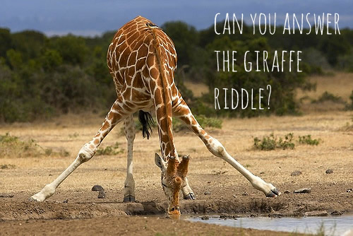 facebook-giraffe-riddle-profile-picture