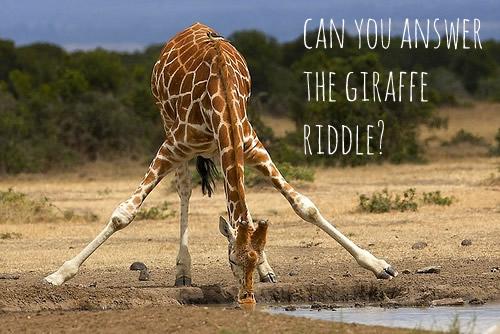 facebook-giraffe-riddle-profile-picture