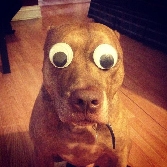 scout-dog-balances-stuff-on-head (11)