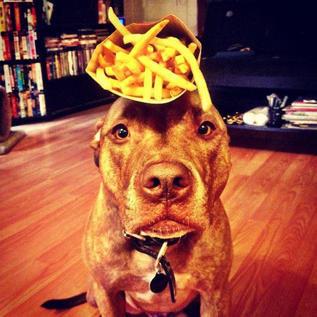 scout-dog-balances-stuff-on-head (12)
