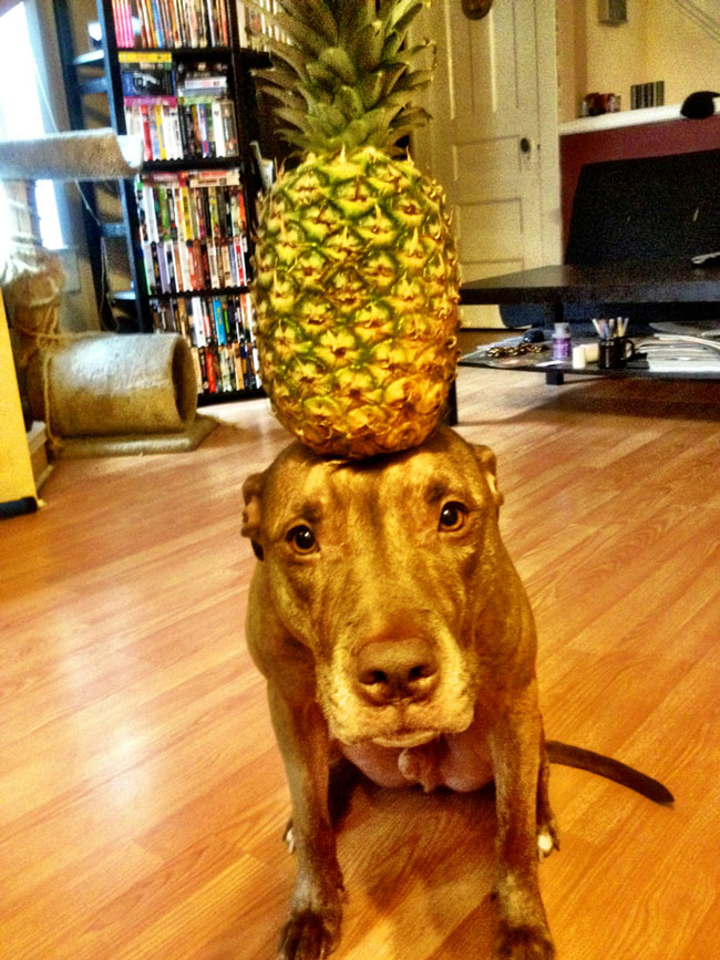 scout-dog-balances-stuff-on-head (15)