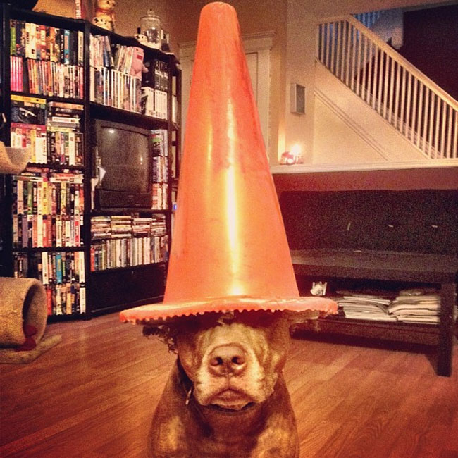 scout-dog-balances-stuff-on-head (16)