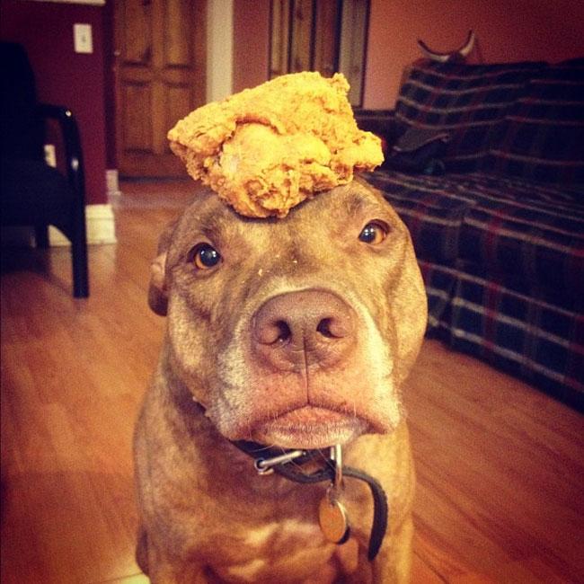 scout-dog-balances-stuff-on-head (18)