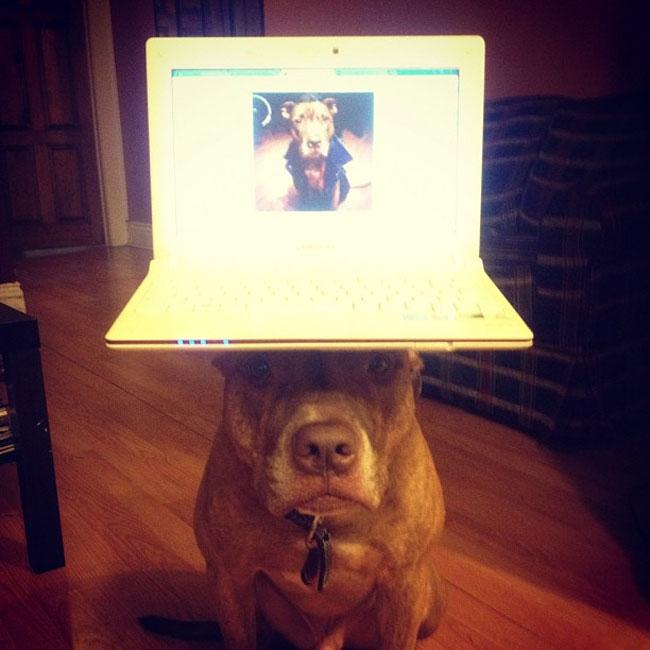 scout dog balances stuff on head 19