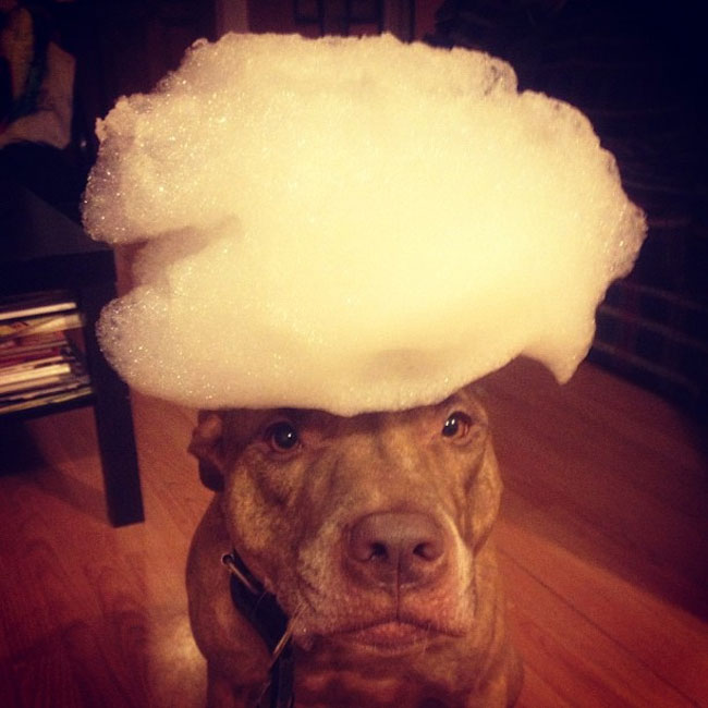 scout-dog-balances-stuff-on-head (20)
