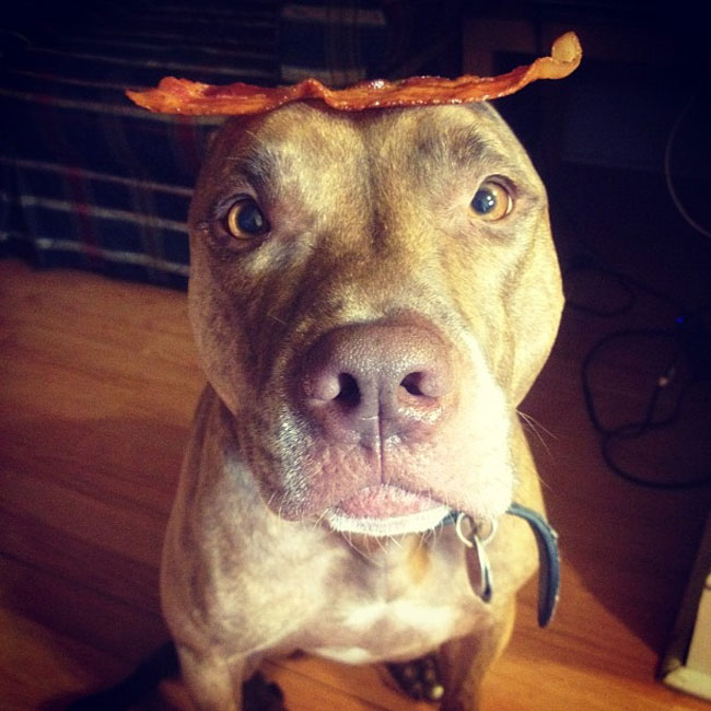scout-dog-balances-stuff-on-head (23)