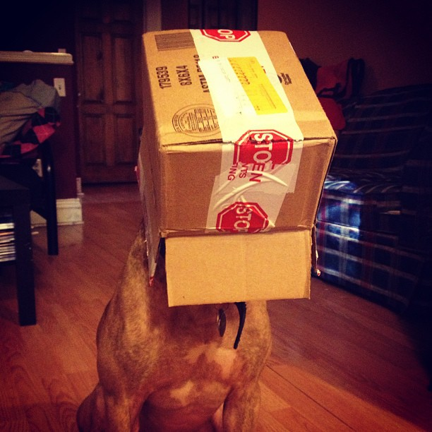 scout-dog-balances-stuff-on-head (4)