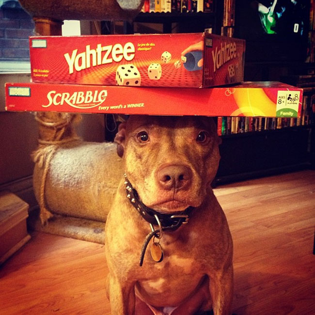 scout-dog-balances-stuff-on-head (7)