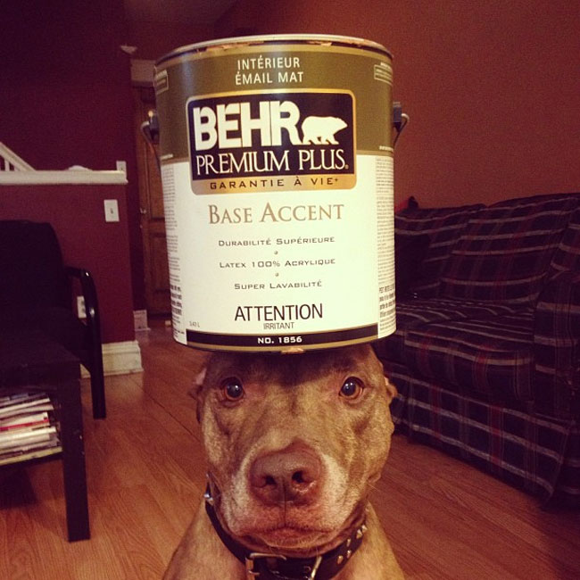 scout-dog-balances-stuff-on-head (8)