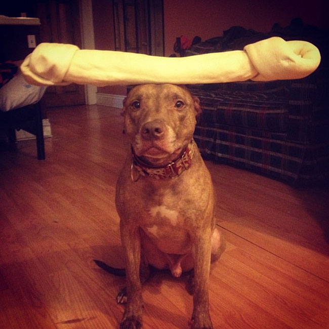 scout-dog-balances-stuff-on-head (9)