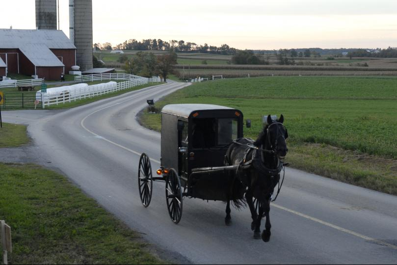 amish buggy accident