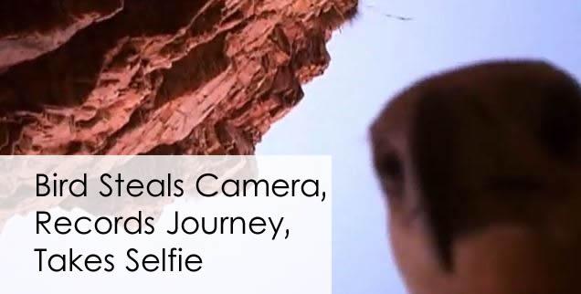 bird-steals-camera-records-journey