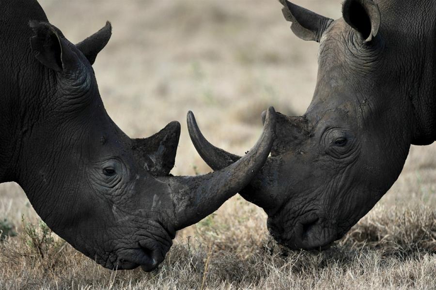 black rhino auction death threats