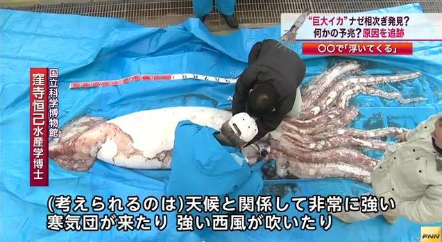 giant-squid-japan-fisherman-non-radioactive