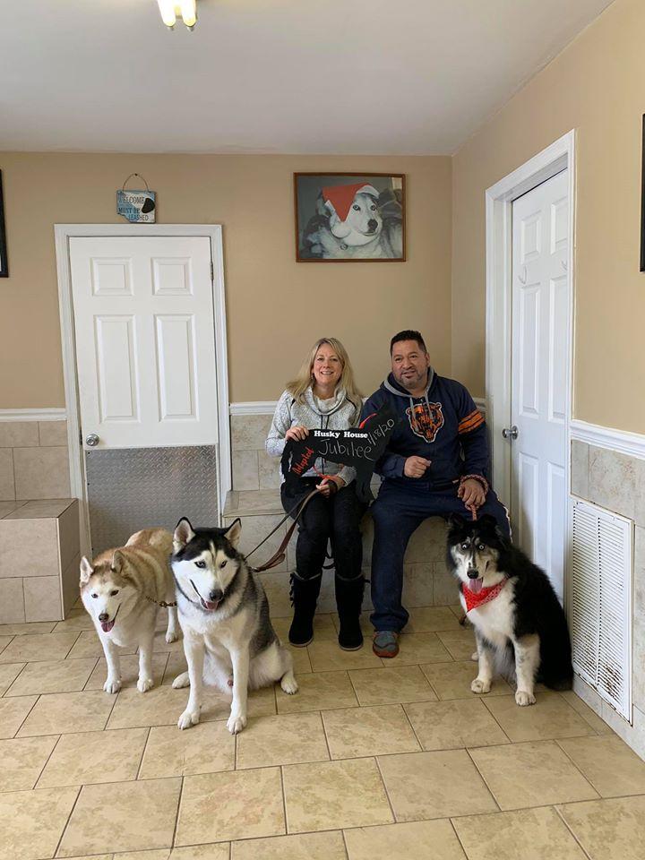 jubilee, husky found forever home